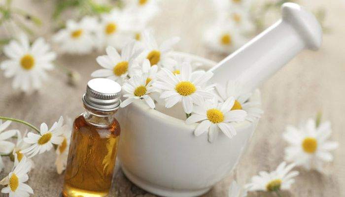 Usos medicinales de la manzanilla