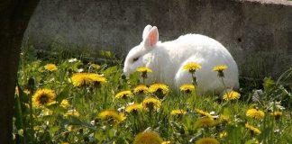 plantas que comen los conejos