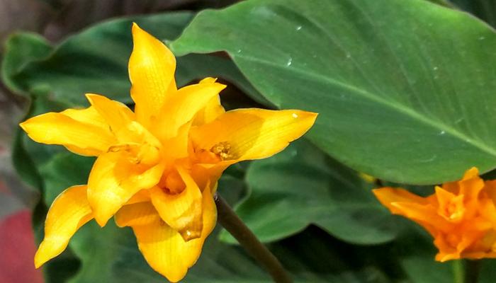 planta con flores naranjas exoticas