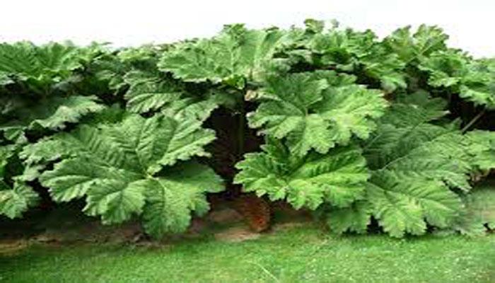 Crecimiento-de-plantas gracias a las hormonas vegetales