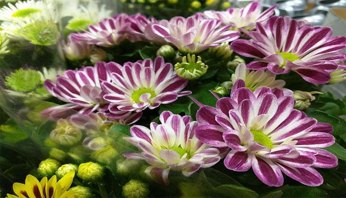 plantas para la buena suerte