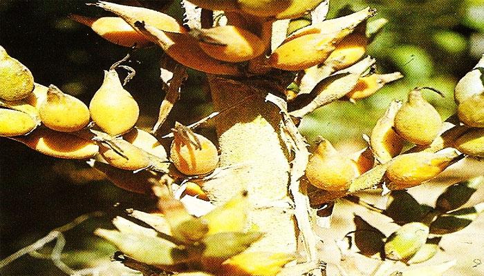 plantas que no tienen semillas