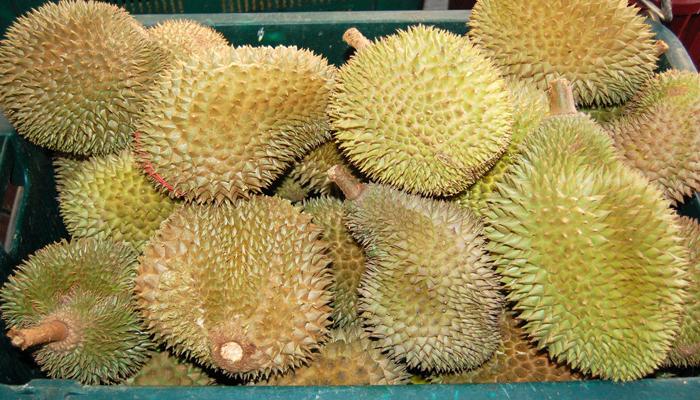 Plantas con frutas cardosas quee se dan por semilla