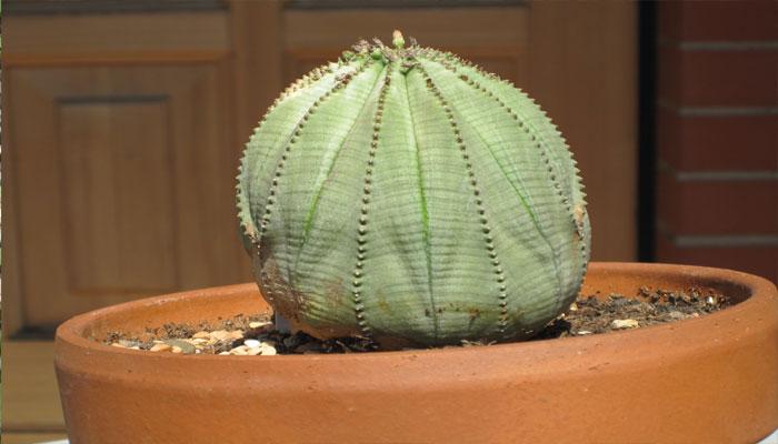 planta que irrita la piel