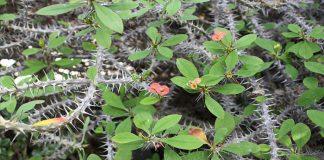Las 10 plantas más comunes que producen urticaria