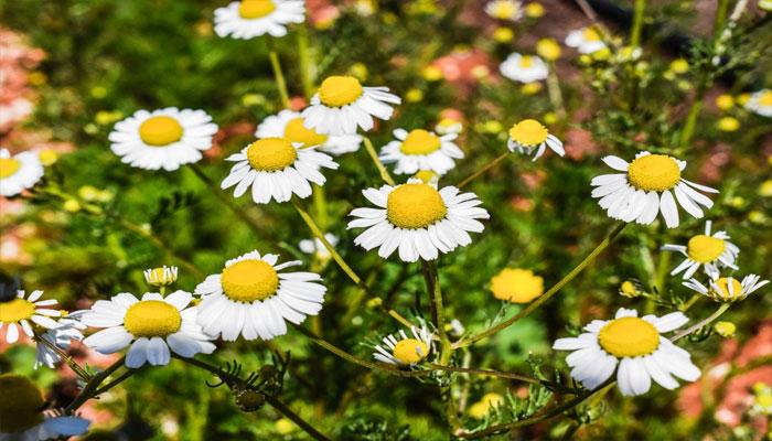 Top las 10 mejores plantas para dormir tranquilo