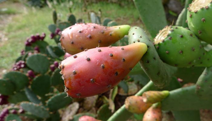 plantas con cardos que se reproducen con semillas