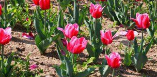Plantas-bien-cuidadas-con-Sulfato-de-Hierro