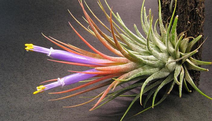 Plantas que viven el el aire