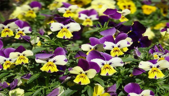 15 Plantas que resisten el sol y quizás no lo sabias