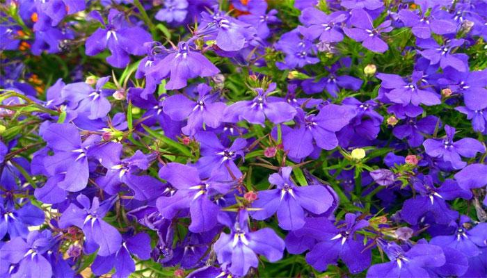 planta con flor morada