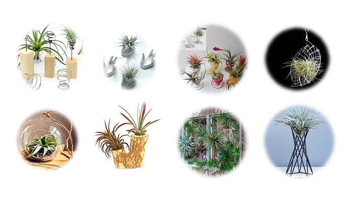 Plantas aéreas