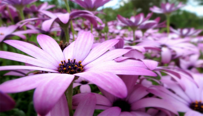 planta de flor morada
