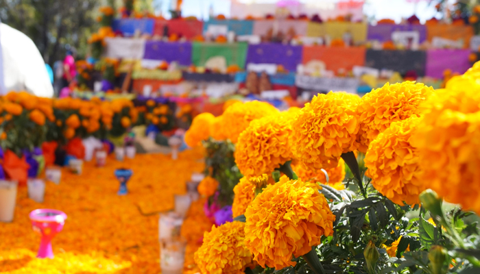 plantas con flores naranja