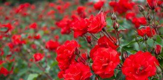 Elementos que necesita una planta para vivir y crecer sana