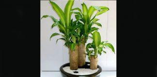 10 plantas que no necesitan luz
