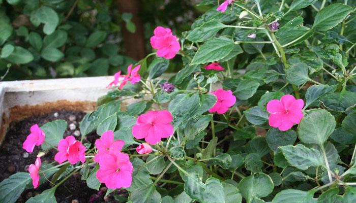 plantas de flores hermosas para regalar