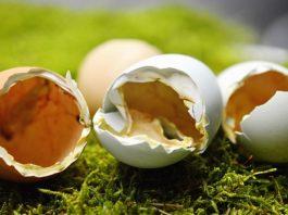 Cascaras de huevo para las plantas