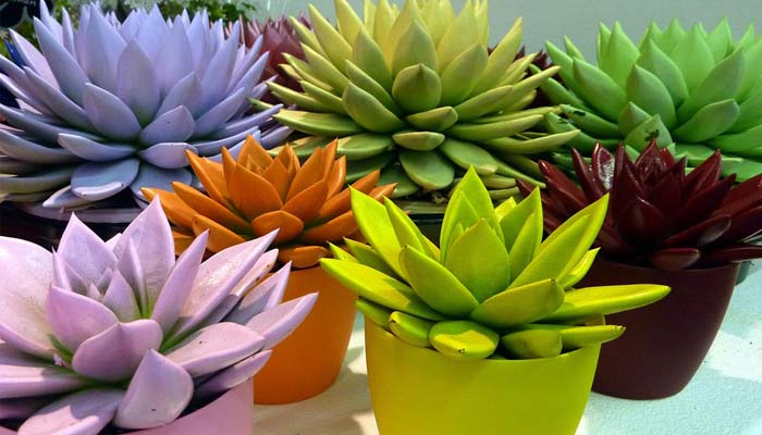 planta orbamental para macetas pequeñas