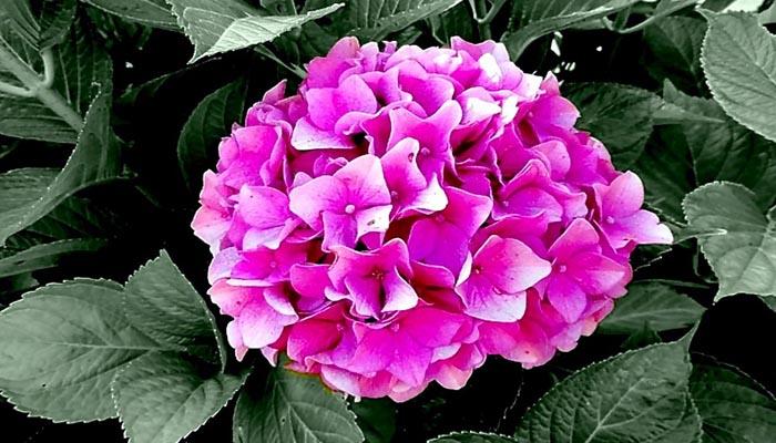 plantas para el verano con flores