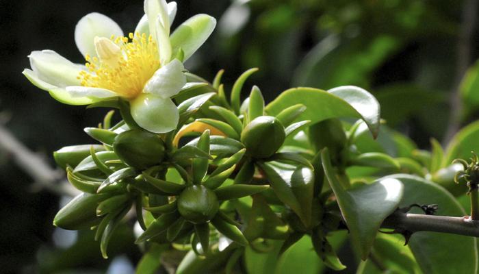 plantas con espinos