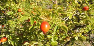 Planta para producir colágeno