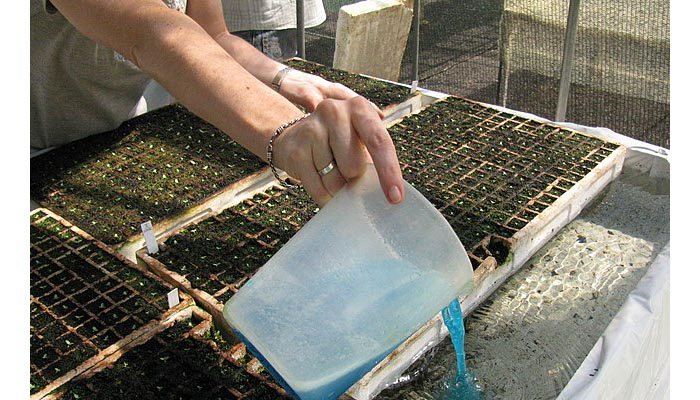 Sistema Flotante Fertilización