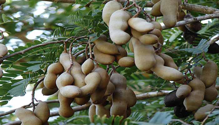 plantas que se reproducen por semillas