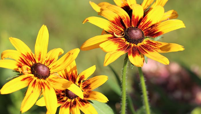 planta de verano