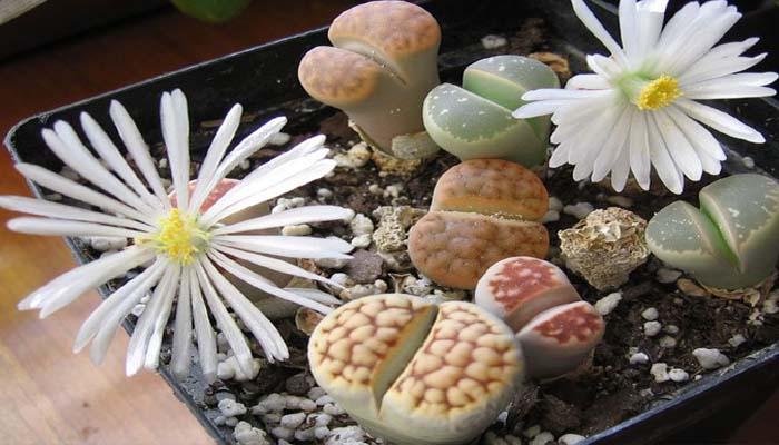 planta pequeña para pequeñas