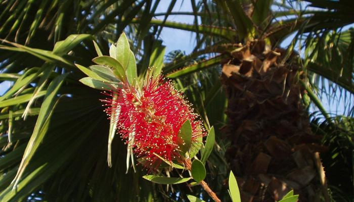 Palma Lady planta oxigenante para habitaciones