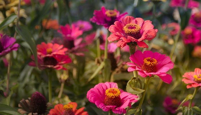 planta que florea en verano
