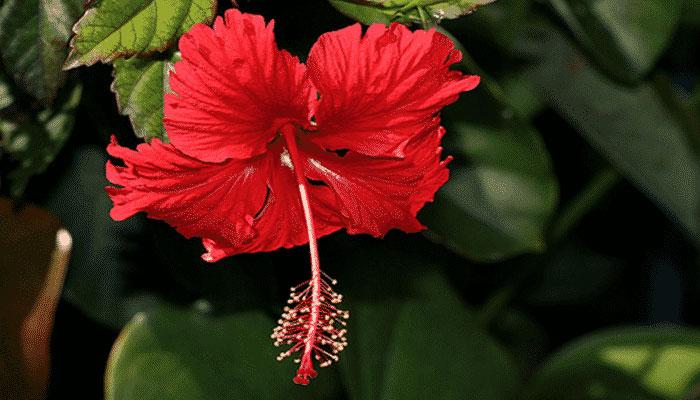 Plantas que fortalecen el sistema inmunológico