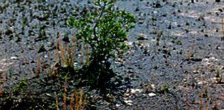 Hidrogel-para-plantas