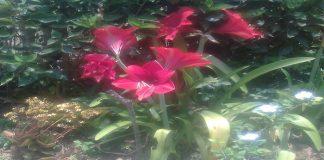 Abono para plantas de flor