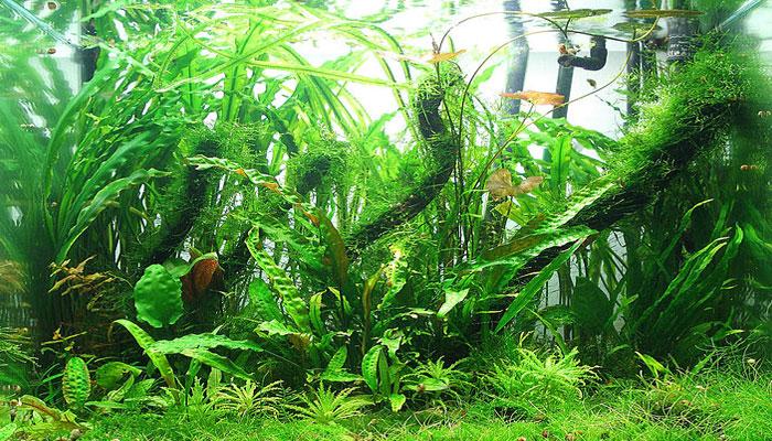 Sustrato-para-plantas-acuáticas