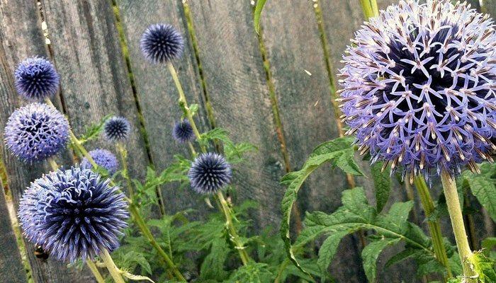 Plantas Que Resisten El Frío