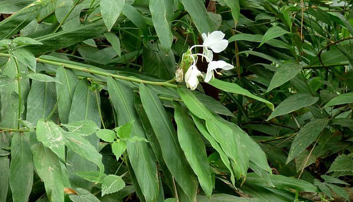 plantas que sirven para desinflamar