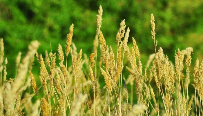 Plantas que desinflaman