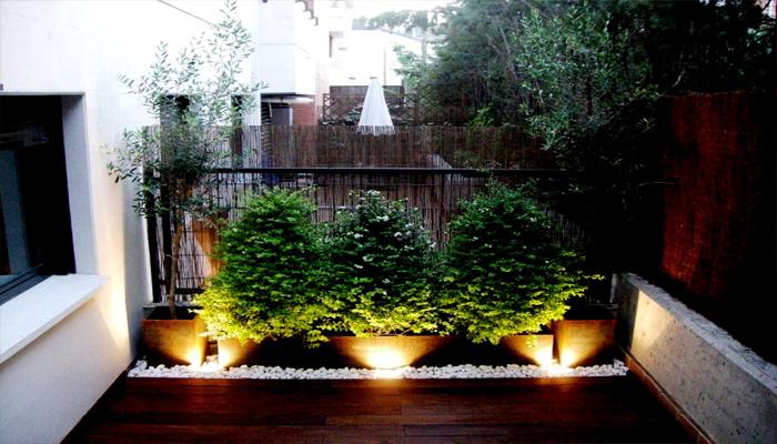 Plantas para un Patio Interior
