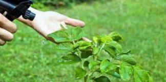 vinagre como insecticida para plantas