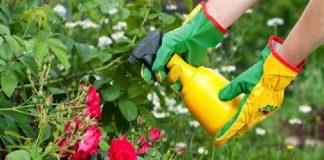 pesticidas naturales para plantas