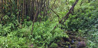 plantas que hay en el bosque