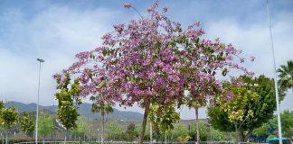 árbol orquídea 1
