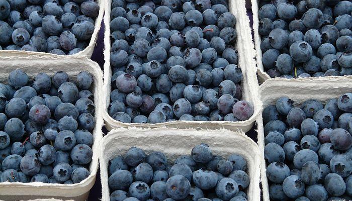 cosecha de uva de monte