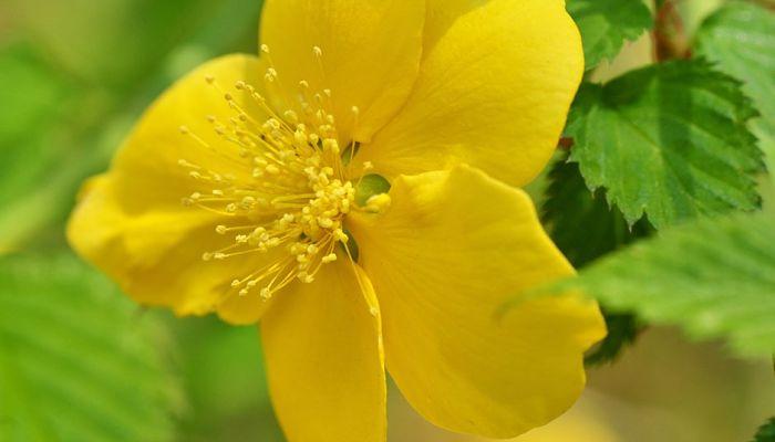 flores de querria