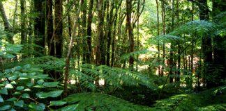 Plantas que viven en el bosque templado