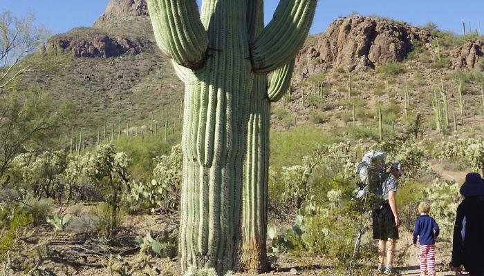 origen del cactus columnar