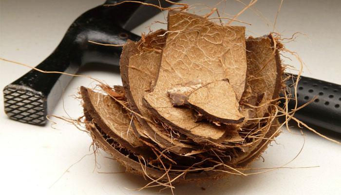 Obtención de la fibra de coco
