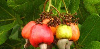 Cosecha (frutos)
